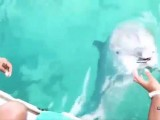 Dolphin Retrieves iPhone from Bottom of Ocean