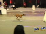 Flyball: The Fastest Team..