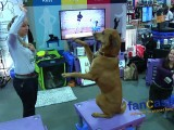 World Dog Expo Highlights..