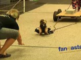 Dog Pulls 1600 Pounds in 16 Seconds