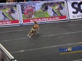 Lure Coursing at World Dog Expo