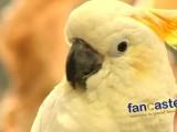 A Sanctuary For Parrots