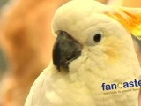 A Sanctuary For Parrots As Featured at Super Pet Expo