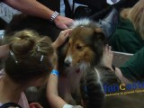 Dog Lovers Congregate at World Dog Expo