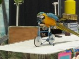 Exotic Bird Show Features Macaw Parrots