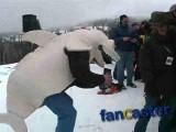 Displaced Land Shark Dances on  Whitefish Mountain