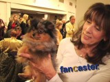 Stunning Blue Merle Pomeranian at 2011 Westminster Dog Show
