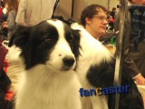 Backstage at Westminster Dog Show