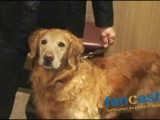 Therapy Dogs Save Lives